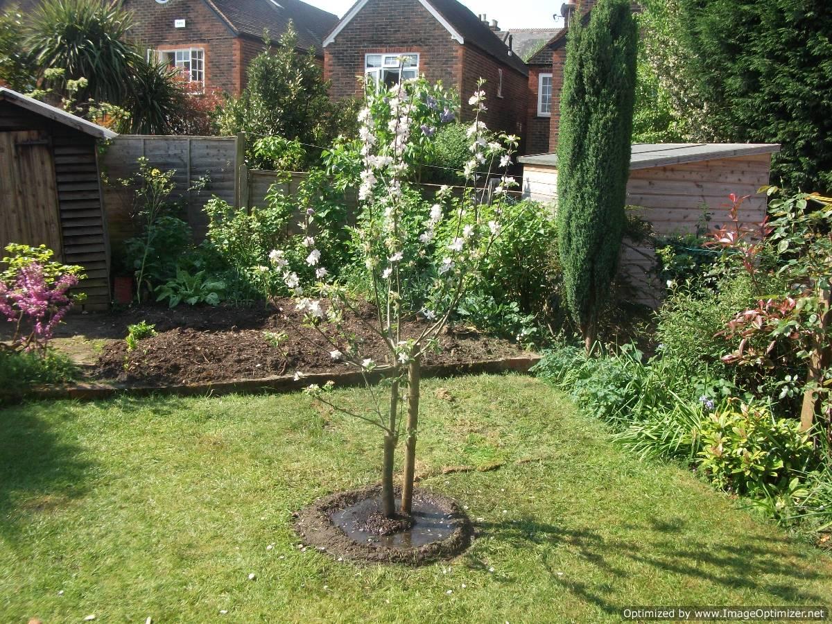 pěstování ovocných stromků